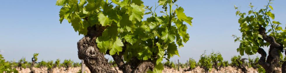 Vignoble et Découverte - chateauneuf du pape vineyard ©chateau la nerthe