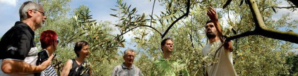 Exclusive Cooking - Olive Trees orchard visiti ©Alain Roth.jpg